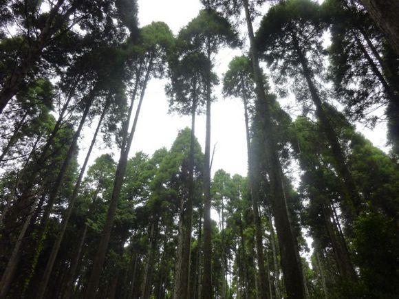 trees-k.JPG